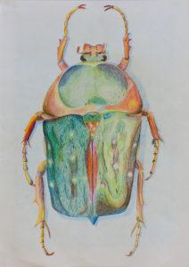 Kunstunterricht - Schülerarbeit Käfer Zeichnen