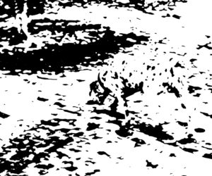 Wahrnehmung: Sehen Sie den Dalmatiner